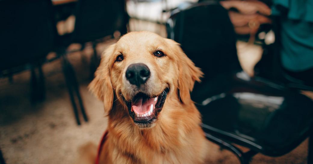 Glücklich schauender Hund